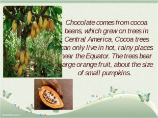 Chocolate comes from cocoa beans, which grew on trees in Central America. Coc
