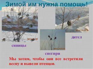 Зимой им нужна помощь! Мы хотим, чтобы они все встретили весну и вывели птенц