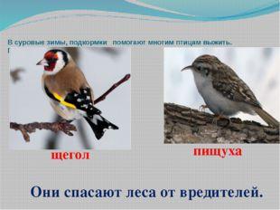В суровые зимы, подкормки помогают многим птицам выжить. Помоги птицам - помо