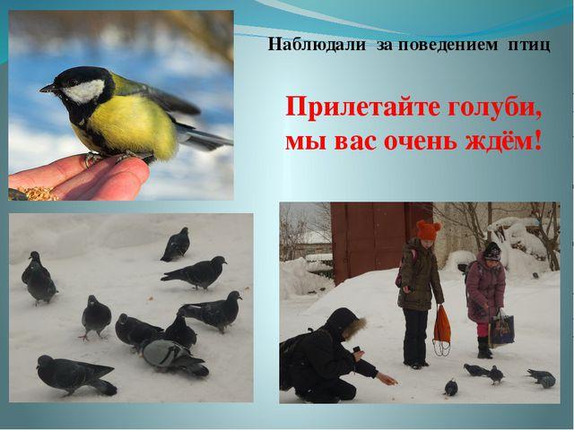 Прилетайте голуби, мы вас очень ждём! Наблюдали за поведением птиц