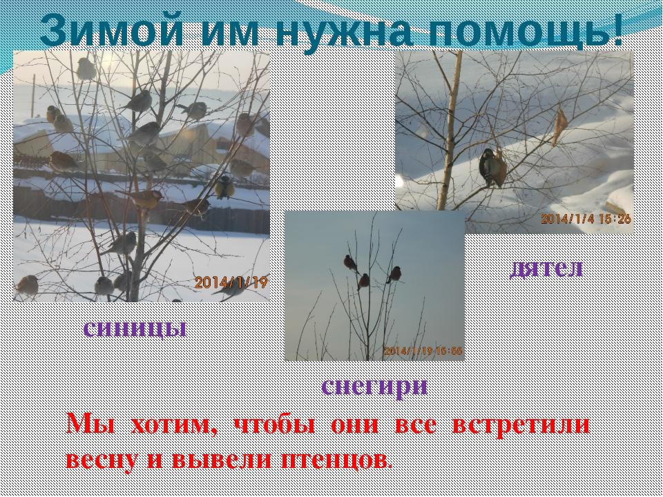 Зимой им нужна помощь! Мы хотим, чтобы они все встретили весну и вывели птенц...