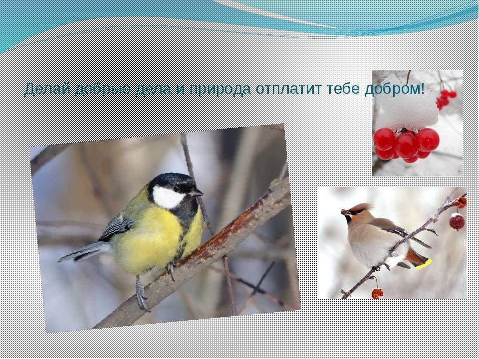 Делай добрые дела и природа отплатит тебе добром!