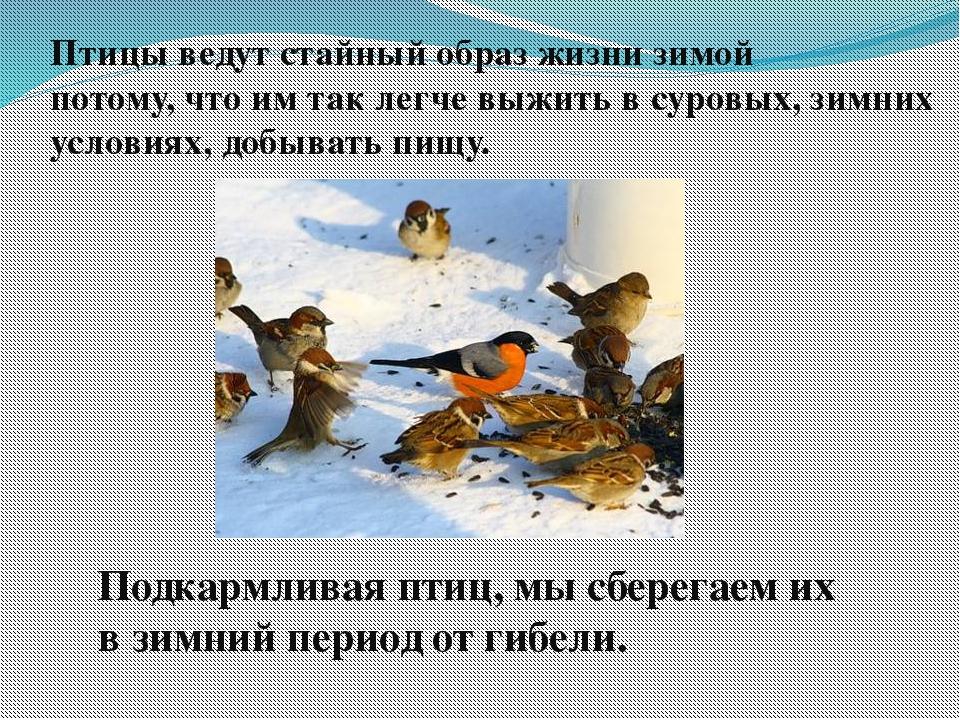 Птицы ведут стайный образ жизни зимой потому, что им так легче выжить в суров...