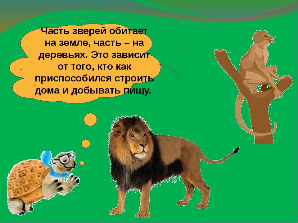 Часть зверей обитает на земле, часть – на деревьях. Это зависит от того, кто...