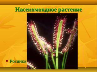 Насекомоядное растение Росянка