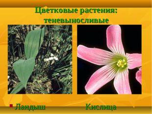 Цветковые растения: теневыносливые Ландыш Кислица