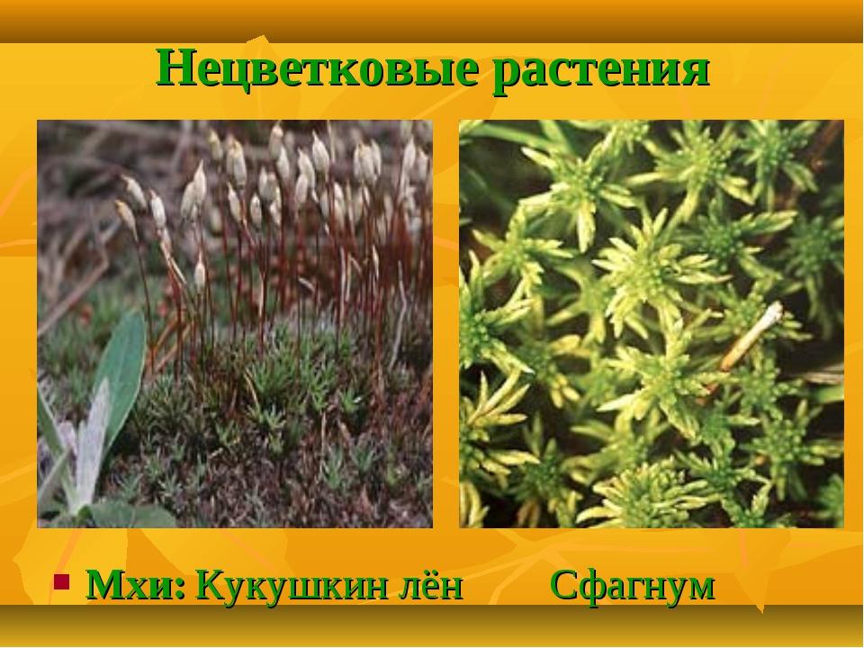 Нецветковые растения Мхи: Кукушкин лён Сфагнум