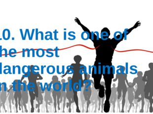 10. What is one of the most dangerous animals in the world?