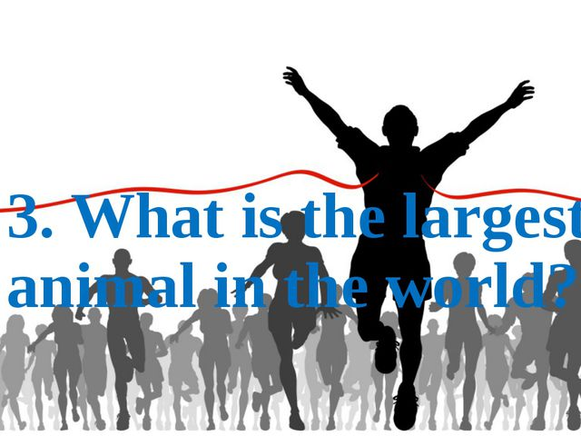 3. What is the largest animal in the world?