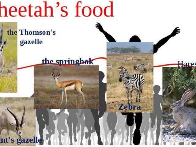 Cheetah's food the Thomson's gazelle the Grant's gazelle the springbok Zebra...