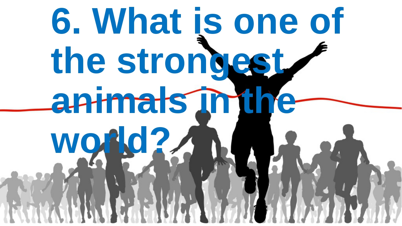 6. What is one of the strongest animals in the world?