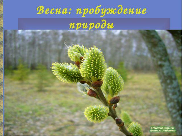 Весна: пробуждение природы