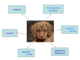 общение игрушки прогулки и игры полноценное питание «собачий уголок» правильн
