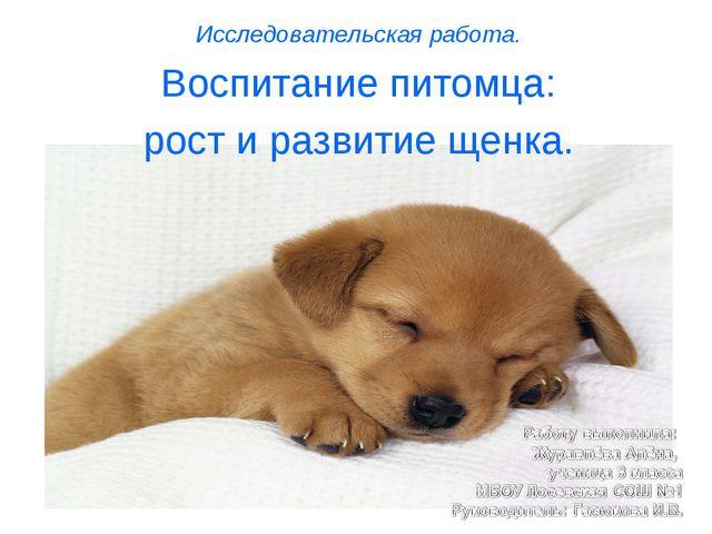 Исследовательская работа. Воспитание питомца: рост и развитие щенка.
