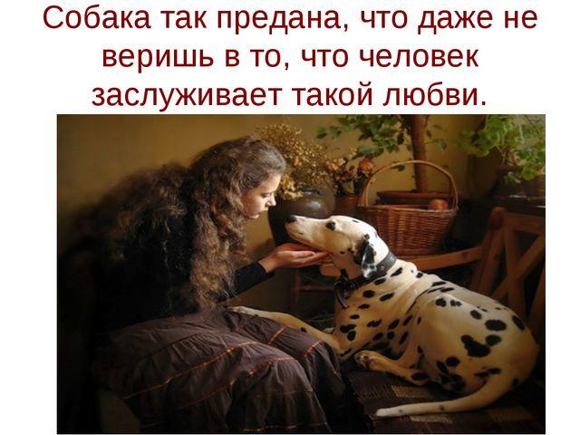 Собака так предана, что даже не веришь в то, что человек заслуживает такой лю...