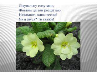 Лікувальну силу маю, Жовтим цвітом розцвітаю. Називають ключ весни! Як я звус