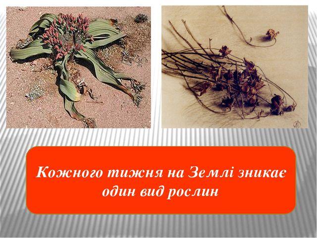 Кожного тижня на Землі зникає один вид рослин