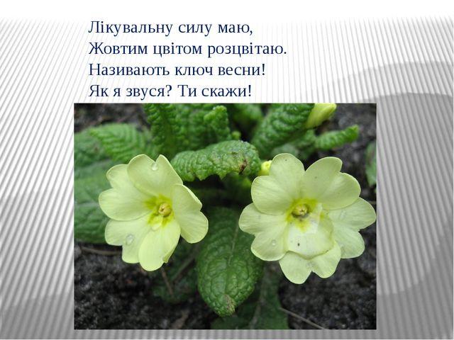 Лікувальну силу маю, Жовтим цвітом розцвітаю. Називають ключ весни! Як я звус...