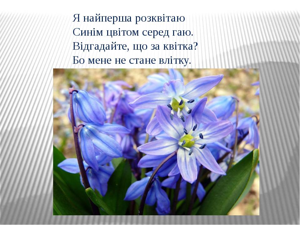 Я найперша розквітаю Синім цвітом серед гаю. Відгадайте, що за квітка? Бо мен...