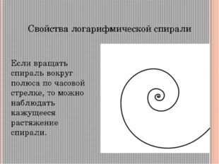 Логарифмическая спираль в природе По логарифмическим спиралям закручены многи