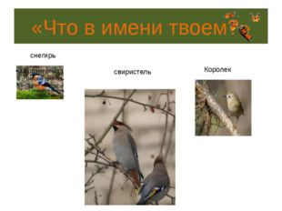«Птичья арифметика» 5. Какая из птиц, умея развивать скорость 170км/ч, придет
