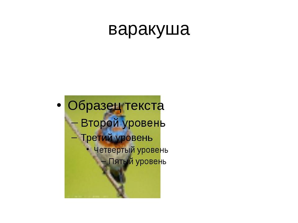 «Что в имени твоем?» Птица-секретарь буревестник глухарь