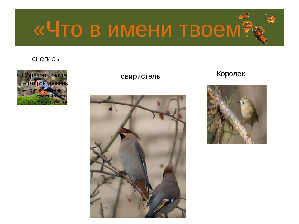 «Птичья арифметика» 5. Какая из птиц, умея развивать скорость 170км/ч, придет...