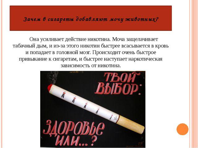 Зачем в сигареты добавляют мочу животных? Она усиливает действие никотина. Мо...