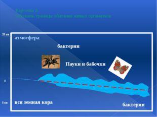 Карточка 3. Обозначь границы обитания живых организмов вся земная кора бакте