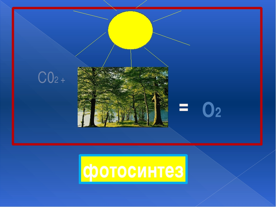С02 + = О2 фотосинтез