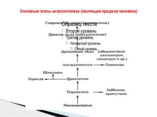 Основные этапы антропогенеза (эволюция предков человека)