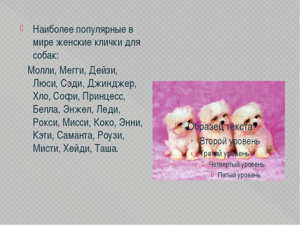 Собачьи именины
