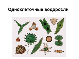 Одноклеточные водоросли