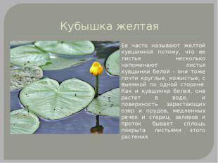 Кубышка желтая Ее часто называют желтой кувшинкой потому, что ее листья неско