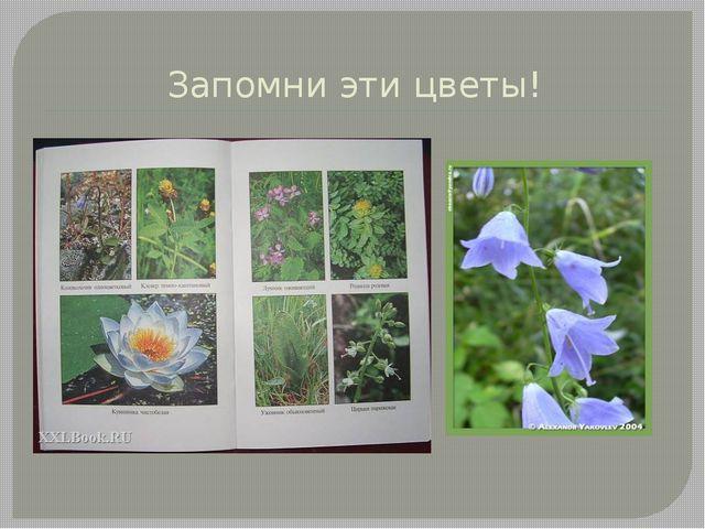 Запомни эти цветы!