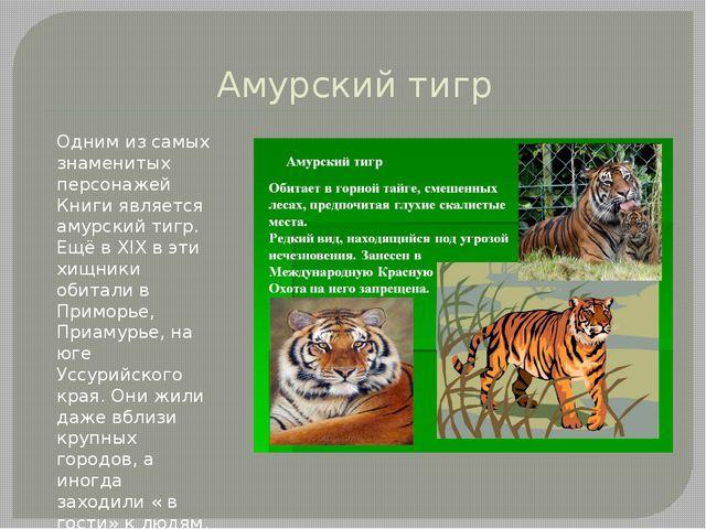 Амурский тигр Одним из самых знаменитых персонажей Книги является амурский ти...