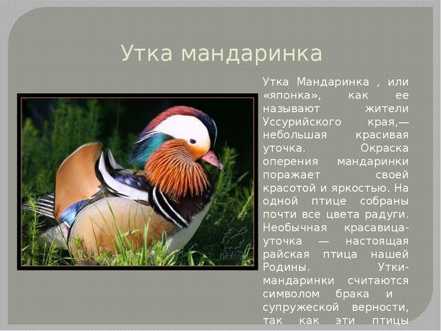 Утка мандаринка Утка Мандаринка , или «японка», как ее называют жители Уссури...