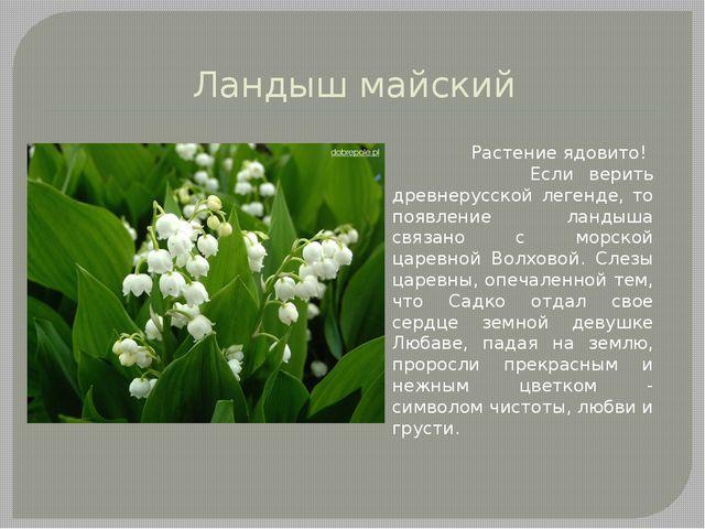 Ландыш майский Растение ядовито! Если верить древнерусской легенде, то появле...