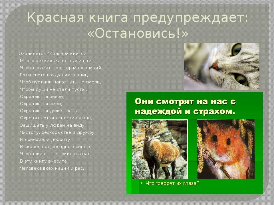 """Красная книга предупреждает: «Остановись!» Охраняется """"Красной книгой"""" Много..."""
