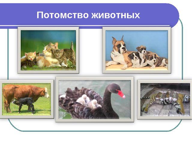 Потомство животных