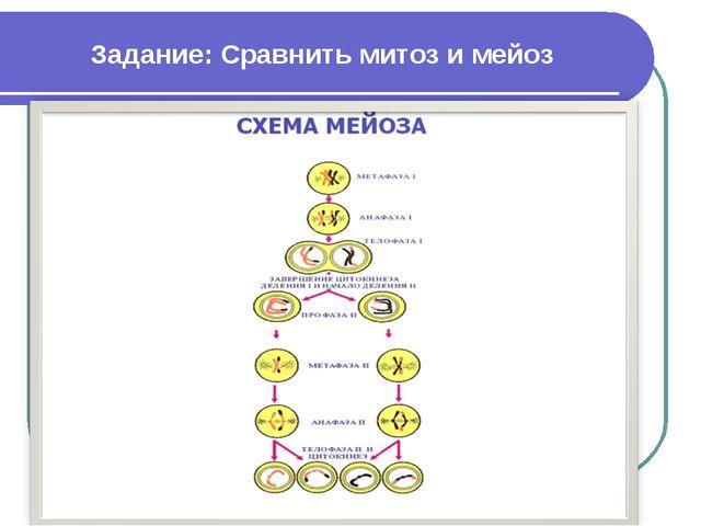 Задание: Сравнить митоз и мейоз