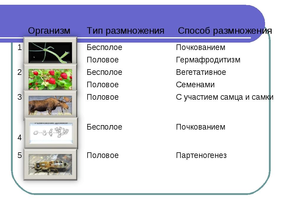 ОрганизмТип размноженияСпособ размножения 1БесполоеПочкованием ПоловоеГе...