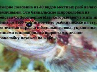 Примерно половина из 40 видов местных рыб являются эндемичными. Это байкальс