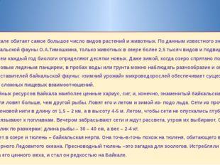 В Байкале обитает самое большое число видов растений и животных. По данным из