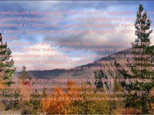 Наибольший вред природе Байкала наносят предприятия целлюлозно-бумажной пром
