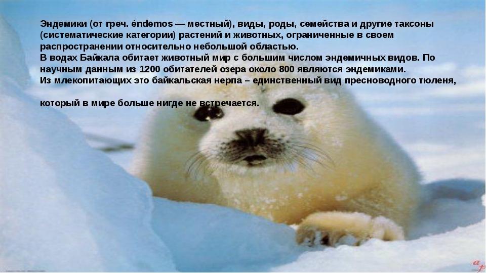 Эндемики (от греч. éndemos — местный), виды, роды, семейства и другие таксон...