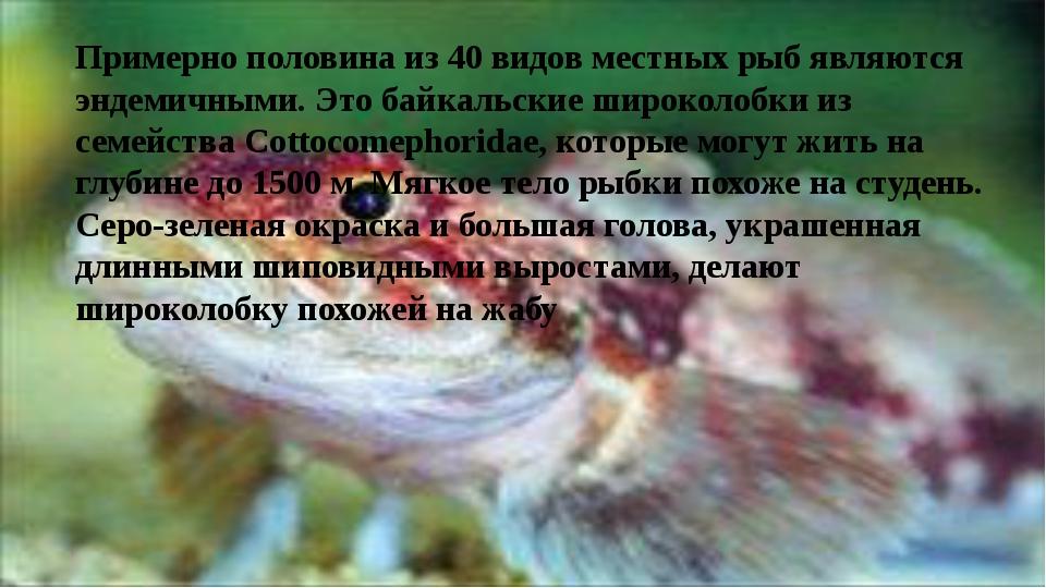 Примерно половина из 40 видов местных рыб являются эндемичными. Это байкальс...