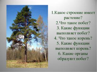 1.Какое строение имеет растение? 2.Что такое побег? 3. Какие функции выполняе