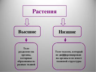 Высшие Низшие Тело разделено на органы, которпые образованы из разных тканей