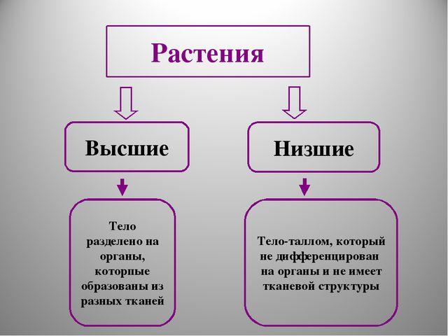 Высшие Низшие Тело разделено на органы, которпые образованы из разных тканей...